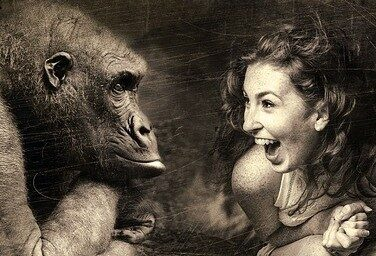 Gorilla and woman looking at each other
